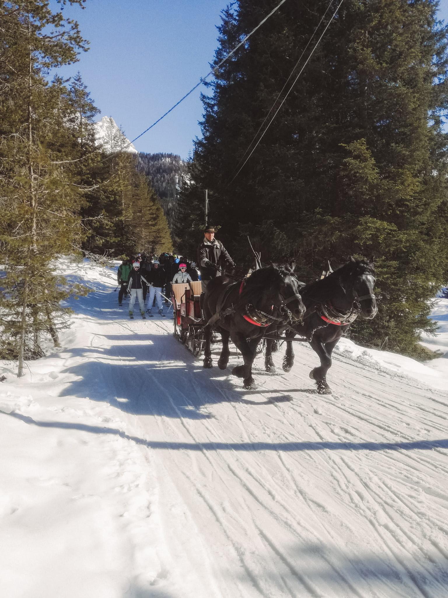 Slitta trainata dai cavalli Scotoni - San Cassiano